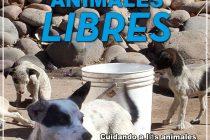 [Mendoza] Campaña Animales Libres