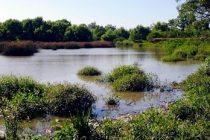 [Bs. As.] Los candidatos de Randazzo piden proteger los humedales de Hudson.